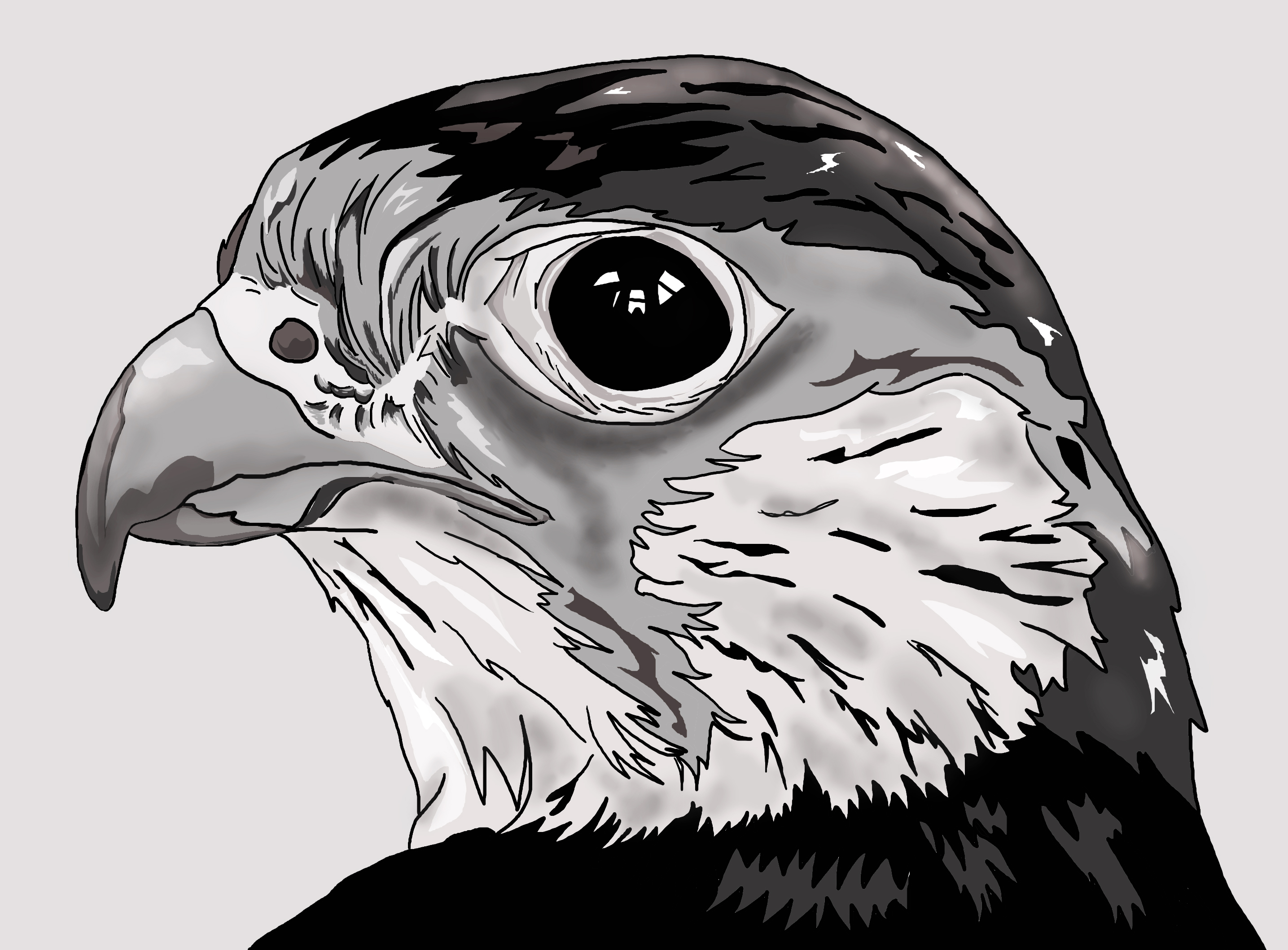 Falcon drawing head