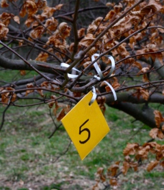Start to formulate a Hunger Games style tale based on random tags hanging in trees.