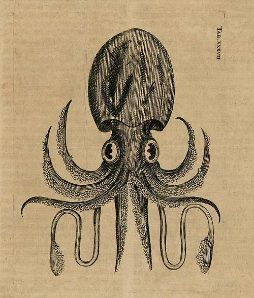 http://liquidnight.tumblr.com/post/441455050/adam-olearius-squid-illustration-from-the