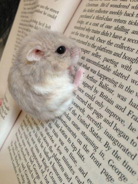 cute-reading