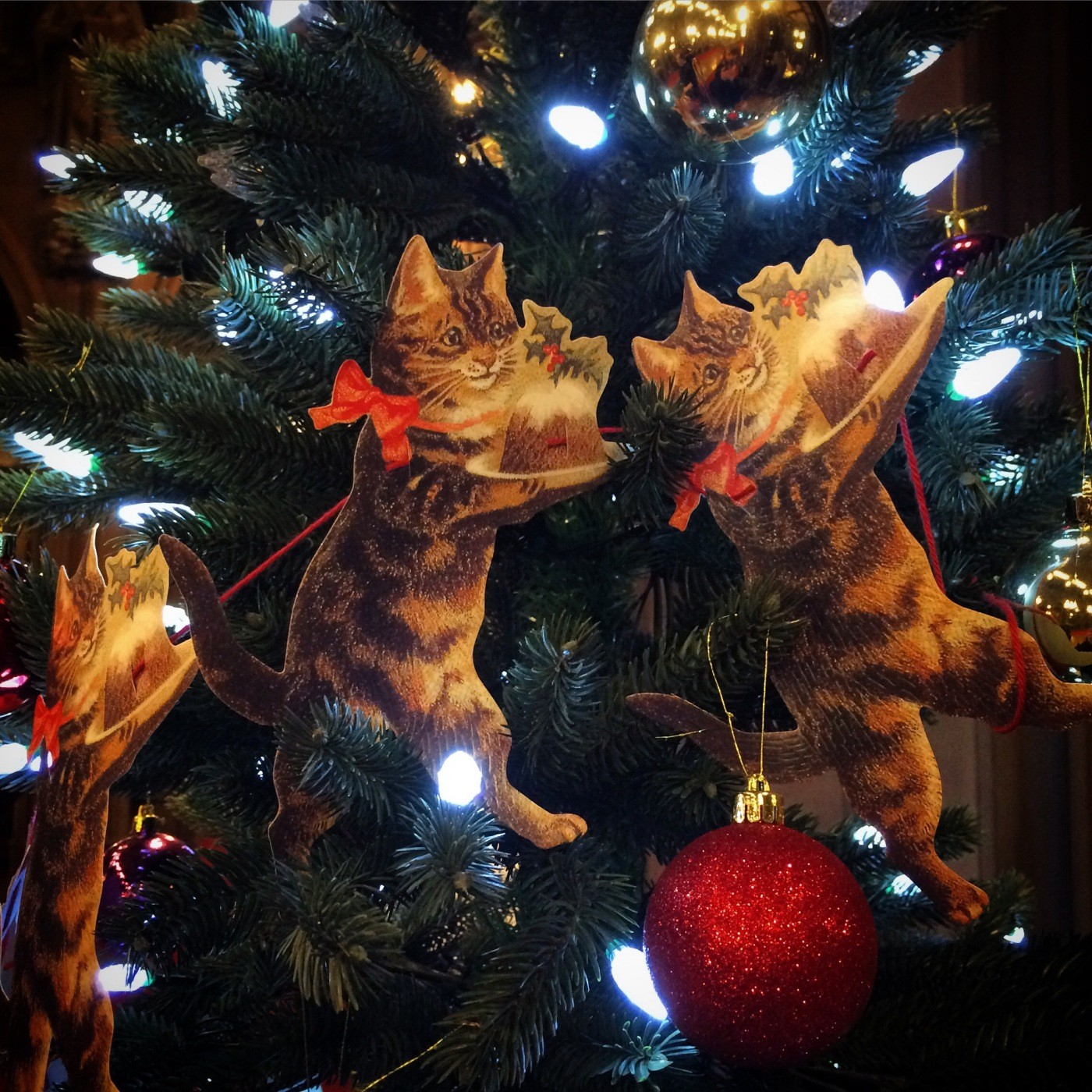Kittens in the Library (#blogmas day 8) – 12 Books in 12 Months